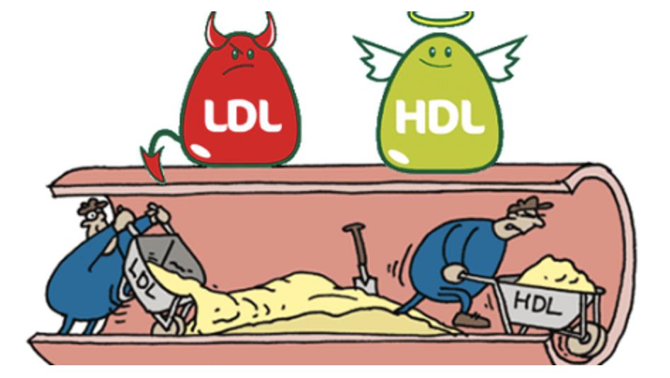 HDL-Cholesterol